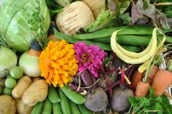 Fresh Vegetables. A display of fresh organic vegetables Stock Photos