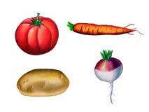 Fresh vegetables. Assorted vegetables. Hand drawn illustration Stock Image