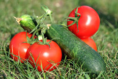 Fresh vegetables. On a green grass royalty free stock images