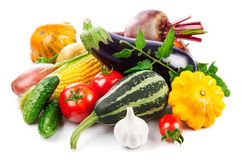 Fresh vegetables autumnal harvest with green leaves stock photography
