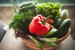 Fresh vegetables in a basket. Courgettes, cucumbers carrots onions dill parsley Stock Images