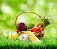 Fresh vegetables in the basket on green grass. Fresh vegetables in the basket on green grass Stock Photos