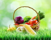 Fresh vegetables in the basket on green grass. Stock Images