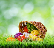 Fresh vegetables in the basket on green grass Stock Images