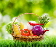 Fresh vegetables in the basket on green grass Royalty Free Stock Images