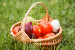 Fresh vegetables in the basket on green grass Stock Image