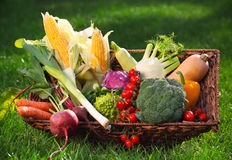 Fresh vegetables in the basket Stock Photography