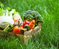 Fresh vegetables in the box Royalty Free Stock Photography