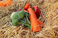 Fresh vegetables  broccoli and grapes on straw. Royalty Free Stock Images