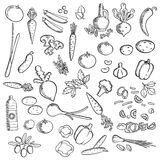 Fresh vegetables and condiments sketch icon Stock Images