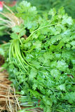 Fresh vegetables - coriander in the market. Stock Photography