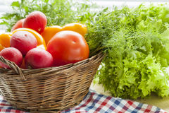 Fresh vegetables covered with water drops in basket. Organic Tomatoes pepper radishes dill parsley and vibrant green lettuce from the market Stock Images