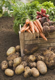 Fresh vegetables in crate Royalty Free Stock Photography