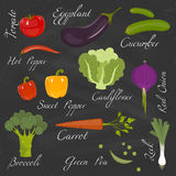 Fresh vegetables. Diet and organic food concept. Vector illustration Stock Images