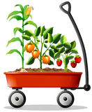Fresh vegetables and fruits in the cart Stock Images