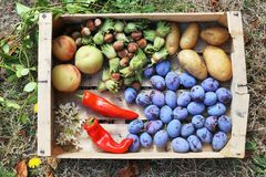 Fresh vegetables and fruits in a wood crate, viewed from above Stock Images