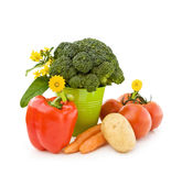 Fresh vegetables from the garden Stock Photography