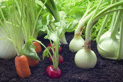 Fresh vegetables in the garden Royalty Free Stock Photos