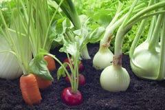 Fresh vegetables in the garden royalty free stock photos