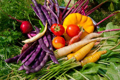 Fresh vegetables. From the garden Stock Image