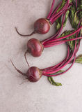Fresh vegetables. garden beet. Royalty Free Stock Photo