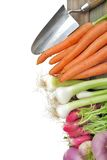Fresh vegetables from garden. Fresh vegetables, carrots, radishes, onions, turnips arranged in a row  with tool on white background Royalty Free Stock Photo