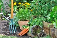 Fresh vegetables from garden Stock Photos