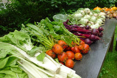 Fresh vegetables from the garden, The Netherlands Stock Photography