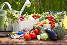 Fresh vegetables in the garden Stock Images