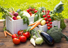 Fresh vegetables in the garden Royalty Free Stock Photo