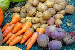 Fresh vegetables from the garden Stock Images