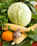 Fresh vegetables - garlic, corn, cabbage, tomatoes from the gard Stock Photography
