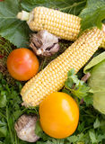 Fresh vegetables - garlic, corn, cabbage, tomatoes from the gard Royalty Free Stock Photo