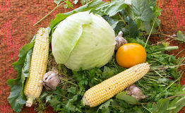 Fresh vegetables - garlic, corn, cabbage, tomatoes and various g Stock Photography