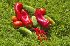 Fresh vegetables on green garden grass Stock Photo