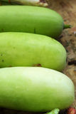 Fresh vegetables - green hatch in the market. Royalty Free Stock Images