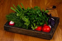 Fresh vegetables with herbs. Fresh vegetables with green herbs Royalty Free Stock Photo