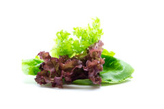 Fresh vegetables and green salad Stock Photo