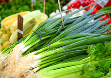 Fresh vegetables. Greens for sale in fruit market Royalty Free Stock Photos