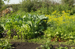 Fresh vegetables that grow in the garden beet, cabbage, Basil, dill - useful vegetables for a healthy diet Stock Images