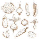 Fresh vegetables hand drawn sketches Stock Images