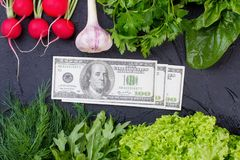 Fresh vegetables with herbs and money. Frame from fresh lettuce, arugula, dill, basil, parsley, garlic, radish and dollars on slate plate Stock Image