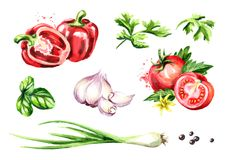Fresh vegetables and herbs set. Watercolor hand drawn illustration, isolated on white background.  stock illustration