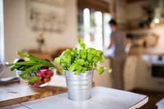 Fresh vegetables and herbs on the table. Fresh vegetables and herbs on the table in the kitchen Stock Images