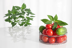 Fresh vegetables and herbs. Fresh tomatoes, cucumbers and herbs on a white table royalty free stock image