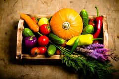 Fresh vegetables and herbs on a wooden burned rustic texture for Stock Photo
