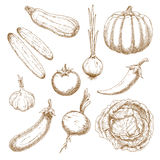 Fresh vegetables isolated sketches set Stock Photo