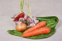 The fresh vegetables from kitchen garden. The different fresh vegetables from kitchen garden Royalty Free Stock Photos