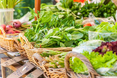 Fresh vegetables at local market. Ecological farm grown vegetables at farm marker in Matakana, New Zealand Royalty Free Stock Photography