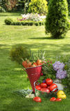 Fresh vegetables and plants. Vegetables harvest and plants in a garden Stock Photography